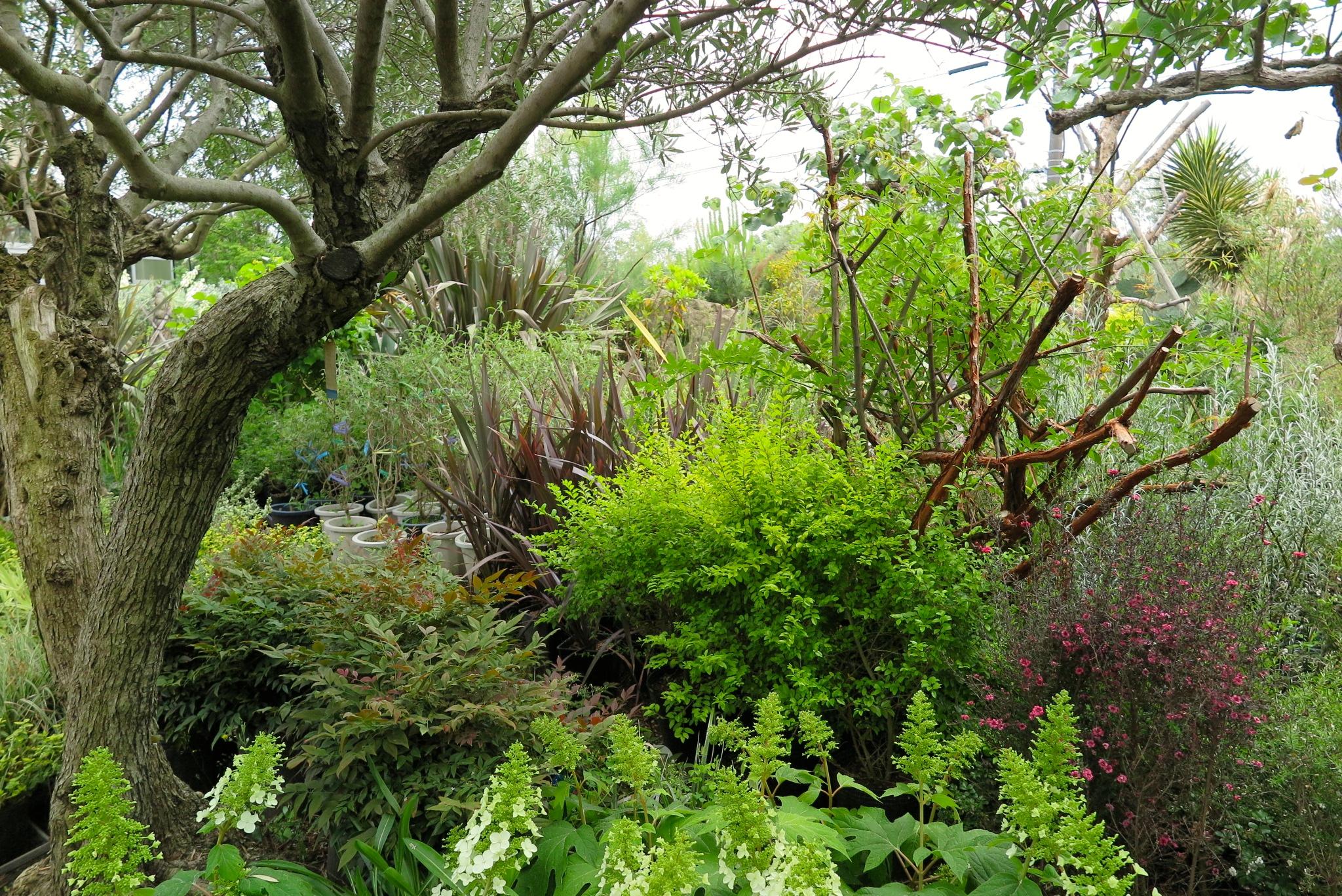 FURUYA PLANTS